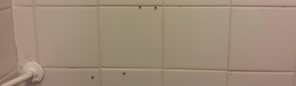 rioolvliegjes op tegels